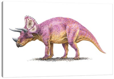 Triceratops Dinosaur, Side View On White Background Canvas Art Print