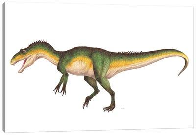 Allosaurus Dinosaur, Side vVew On White Background Canvas Art Print