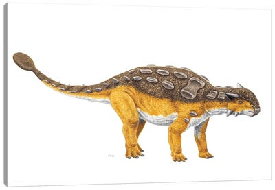 Ankylosaurus Dinosaur, Side View On White Background Canvas Art Print