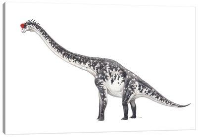 Brachiosaurus Dinosaur, Side View On White Background Canvas Art Print