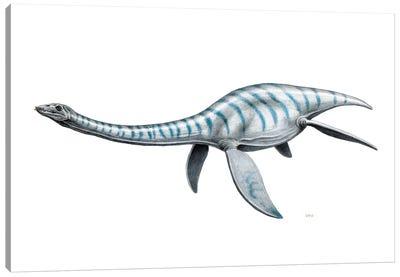 Plesiosaurus Aquatic Reptile, Side View On White Background Canvas Art Print