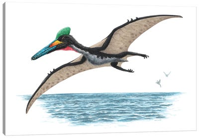 Pterodactylus Flying Over Water, On White Background Canvas Art Print
