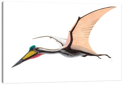 Quetzalcoatlus Flying Reptile, On White Background Canvas Art Print
