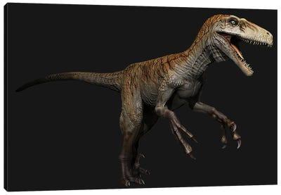 Utahraptor Dinosaur, Side View On Black Background Canvas Art Print