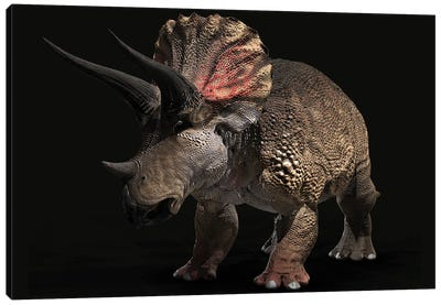 Triceratops Dinosaur On Black Background Canvas Art Print