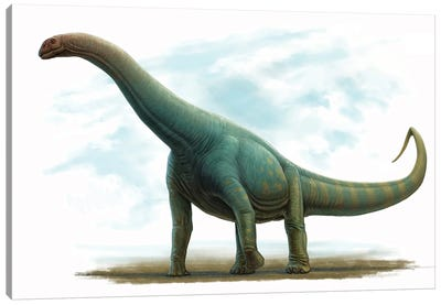 Spinophorosaurus Nigerensis, Side View Canvas Art Print