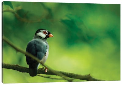 A Small Iberomesornis Bird Is Perched In The Middle Of The Forest Canvas Art Print