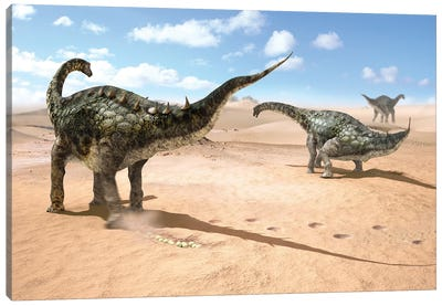 A Group Of Female Lohuecotitan Dinosaurs Lay Their Eggs In The Sand, Before Burying Them Canvas Art Print