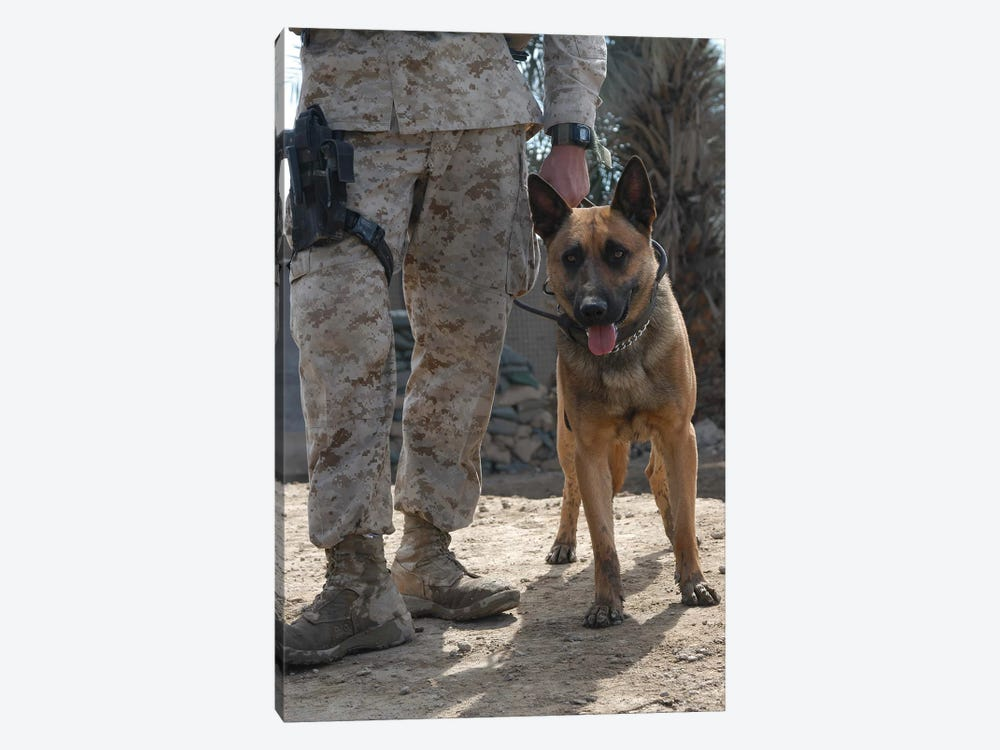 A Belgium Malonois Military Working Dog Stands By His Handler by Stocktrek Images 1-piece Canvas Wall Art