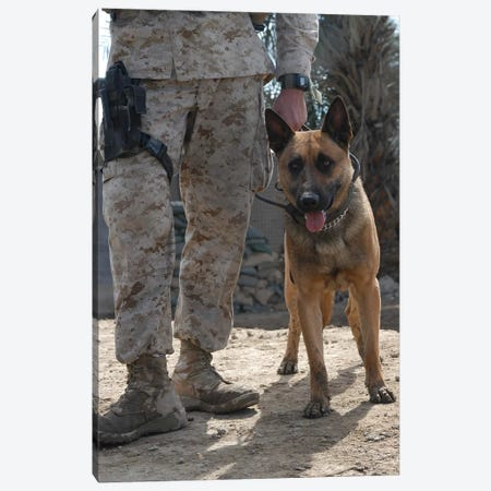 A Belgium Malonois Military Working Dog Stands By His Handler Canvas Print #TRK529} by Stocktrek Images Canvas Artwork