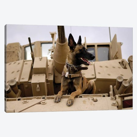 A Military Working Dog Sits On A US Army M2A3 Bradley Fighting Vehicle Canvas Print #TRK574} by Stocktrek Images Canvas Art