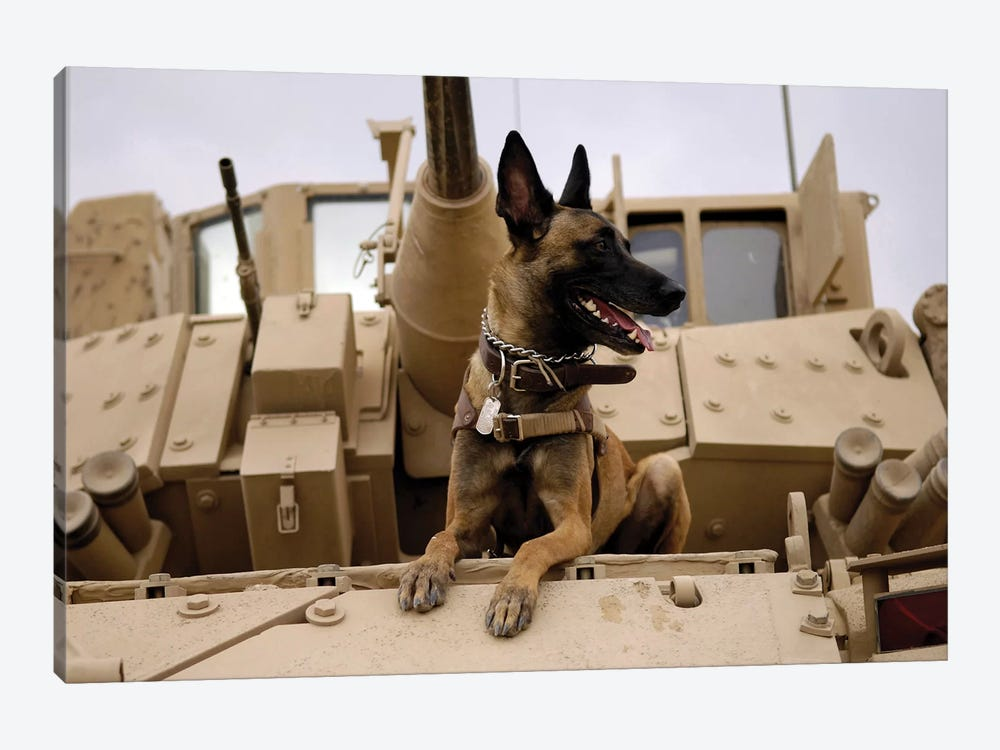 A Military Working Dog Sits On A US Army M2A3 Bradley Fighting Vehicle by Stocktrek Images 1-piece Canvas Artwork