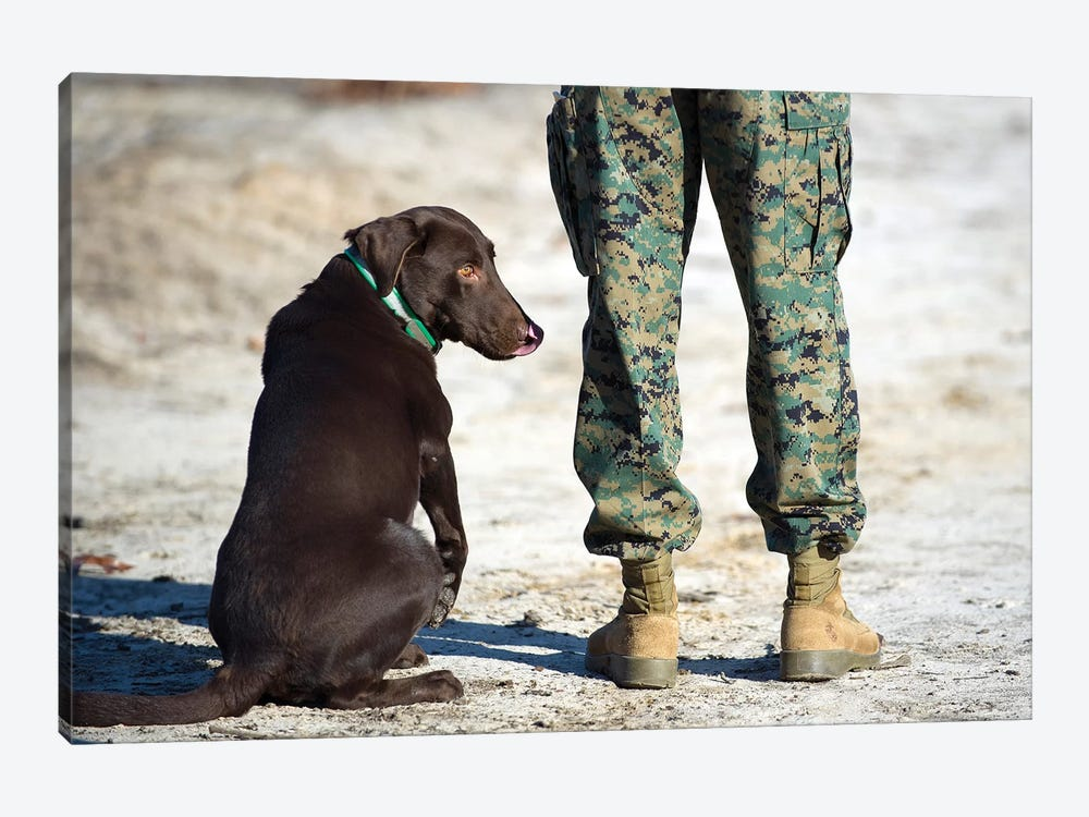 A Military Working Dog Waits For A Command From His Trainer by Stocktrek Images 1-piece Canvas Print