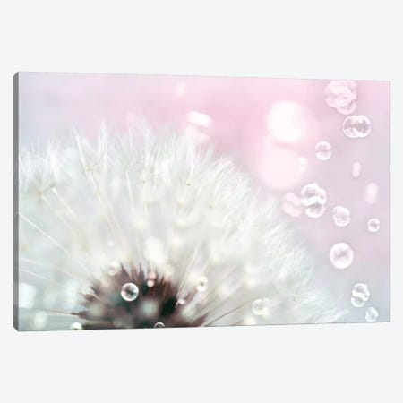 Pink Dandelion 3-Piece Canvas #TRT15} by Tracey Telik Canvas Art Print