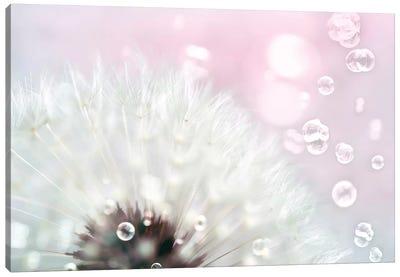 Pink Dandelion Canvas Art Print