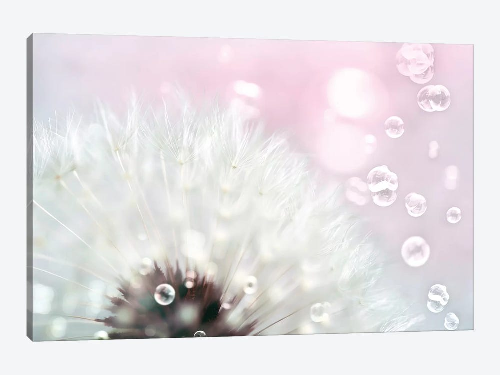 Pink Dandelion by Tracey Telik 1-piece Canvas Artwork