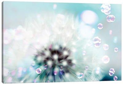 Teal Dandelion Canvas Art Print