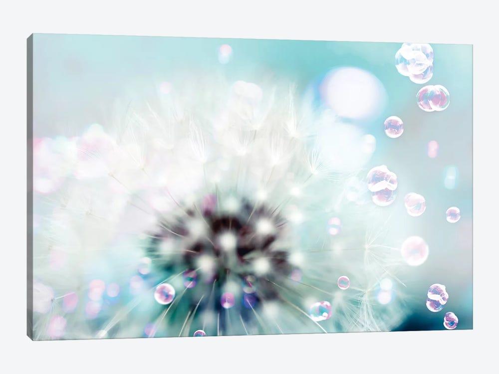 Teal Dandelion by Tracey Telik 1-piece Canvas Artwork