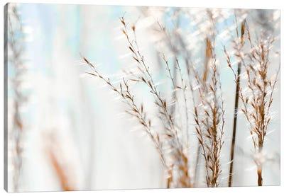 Blue Grasses Canvas Art Print