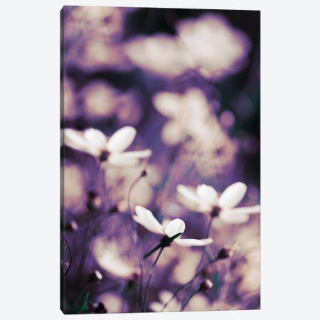 Cosmos Canvas Print #TRT9} by Tracey Telik Canvas Artwork