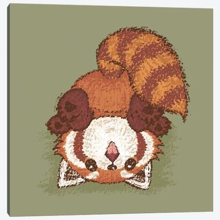 Red Panda Turn Over Canvas Print #TSG103} by Toru Sanogawa Canvas Wall Art