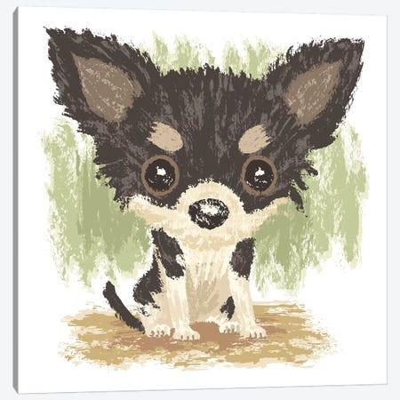 Chihuahua Is Sitting II Canvas Print #TSG29} by Toru Sanogawa Canvas Art Print