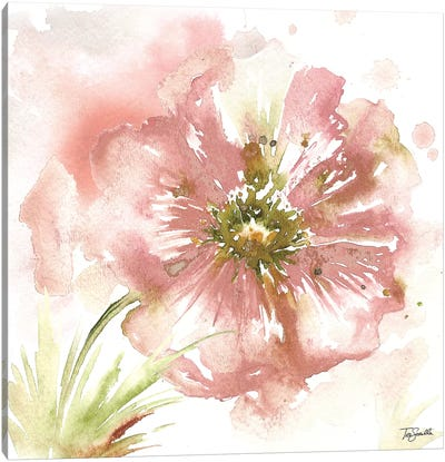 Blush Watercolor Poppy I Canvas Art Print