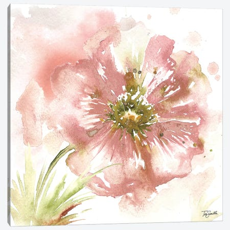 Blush Watercolor Poppy I Canvas Print #TSS126} by Tre Sorelle Studios Canvas Print