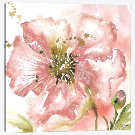 Blush Watercolor Poppy II Canvas Print #TSS127} by Tre Sorelle Studios Canvas Print