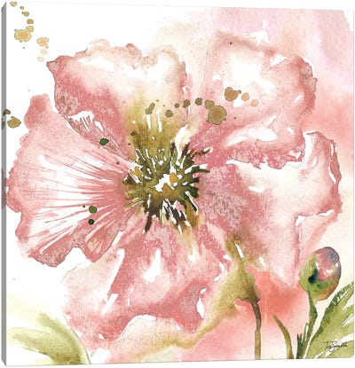 Blush Watercolor Poppy II Canvas Art Print