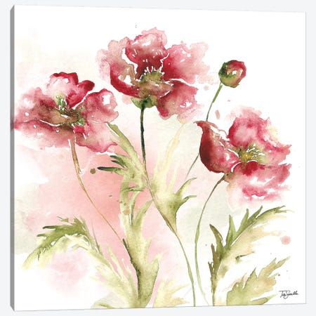 Blush Watercolor Poppy III Canvas Print #TSS128} by Tre Sorelle Studios Canvas Art