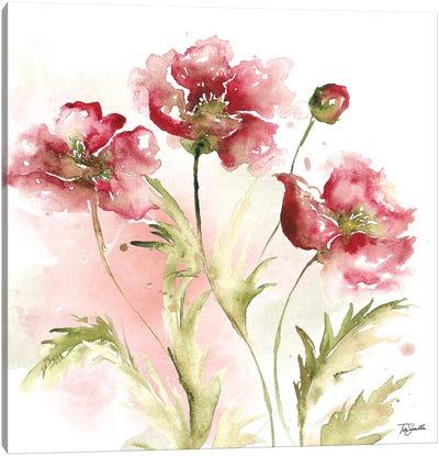 Blush Watercolor Poppy III Canvas Art Print