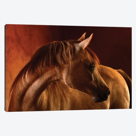 Clay Canvas Print #TST4} by Tony Stromberg Canvas Artwork