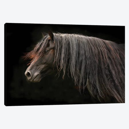 Ebony Canvas Print #TST5} by Tony Stromberg Canvas Art