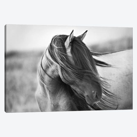 Fierce Grace Canvas Print #TST7} by Tony Stromberg Canvas Artwork