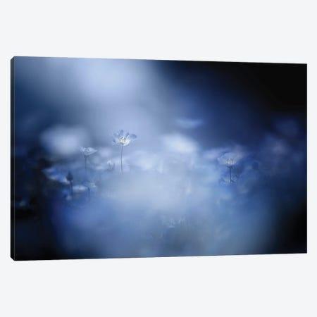 Gentle Light Canvas Print #TSU13} by Takashi Suzuki Canvas Artwork