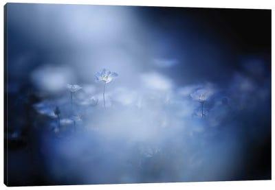 Gentle Light Canvas Art Print