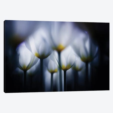 Overlapping White Canvas Print #TSU14} by Takashi Suzuki Canvas Print