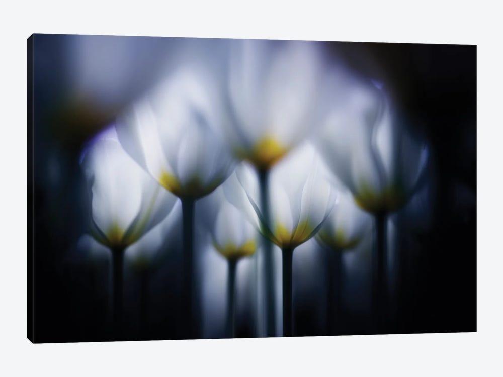 Overlapping White by Takashi Suzuki 1-piece Canvas Wall Art