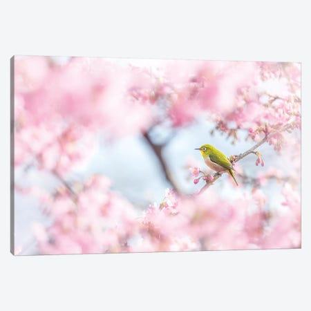 Cherry-Blossom Color I Canvas Print #TSU3} by Takashi Suzuki Canvas Artwork