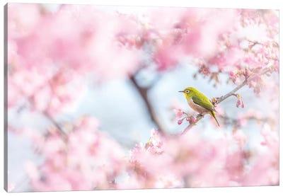 Cherry-Blossom Color I Canvas Art Print
