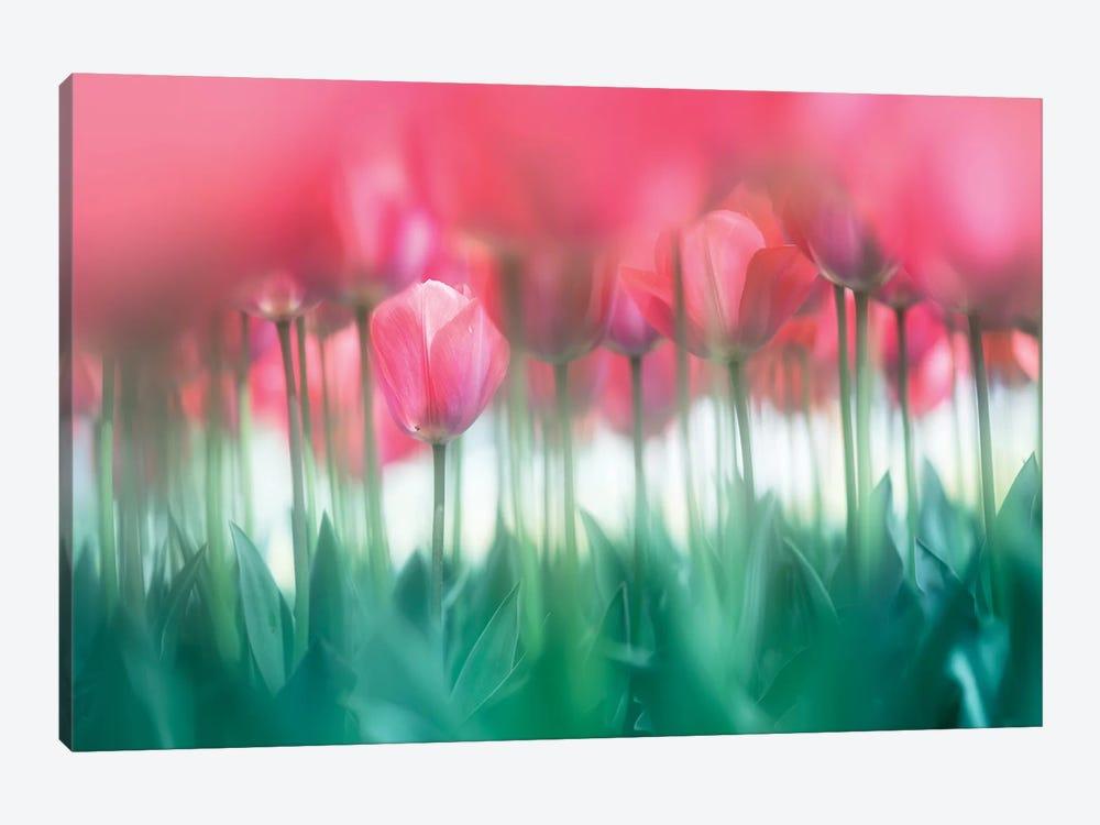 Lined Tulips by Takashi Suzuki 1-piece Canvas Art