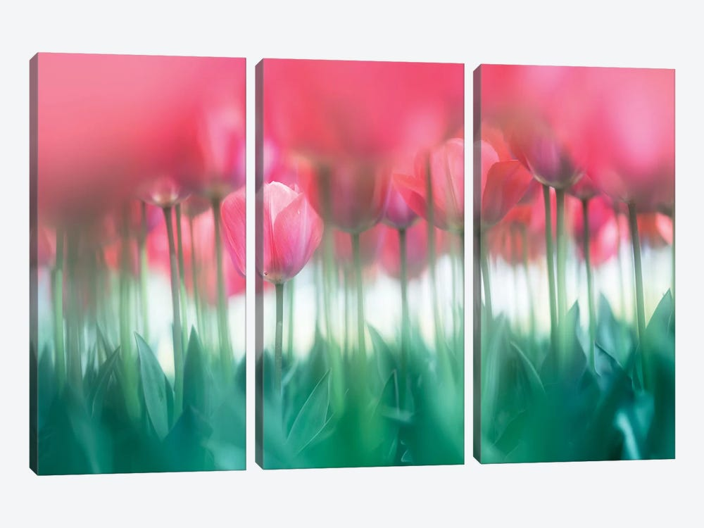 Lined Tulips by Takashi Suzuki 3-piece Canvas Artwork