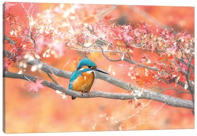 Under The Autumn Leaves Canvas Art Print