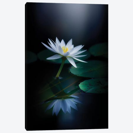 Reflection Canvas Print #TSU8} by Takashi Suzuki Canvas Wall Art
