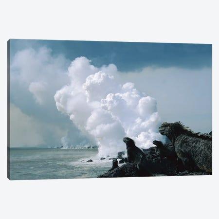 Group Of Marine Iguanas With Lava Flow Entering Sea, Cape Hammond, Fernandina Island, Galapagos Islands, Ecuador Canvas Print #TUI55} by Tui De Roy Canvas Art Print