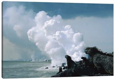 Group Of Marine Iguanas With Lava Flow Entering Sea, Cape Hammond, Fernandina Island, Galapagos Islands, Ecuador Canvas Art Print