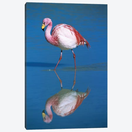 A Wading Puna Flamingo And Its Reflection, Laguna Colorada, Andean Altiplano, Bolivia Canvas Print #TUI58} by Tui De Roy Canvas Wall Art