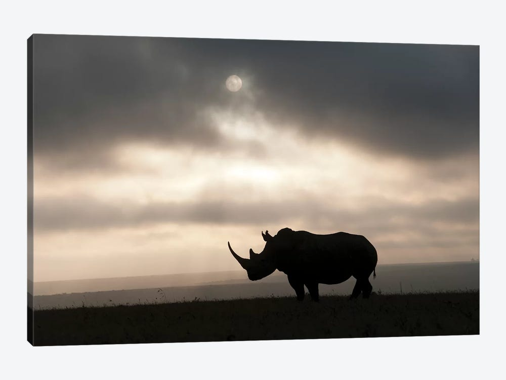 White Rhinoceros At Sunset, Solio Game Reserve, Kenya by Tui De Roy 1-piece Canvas Print