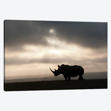 White Rhinoceros At Sunset, Solio Game Reserve, Kenya Canvas Print #TUI63} by Tui De Roy Art Print